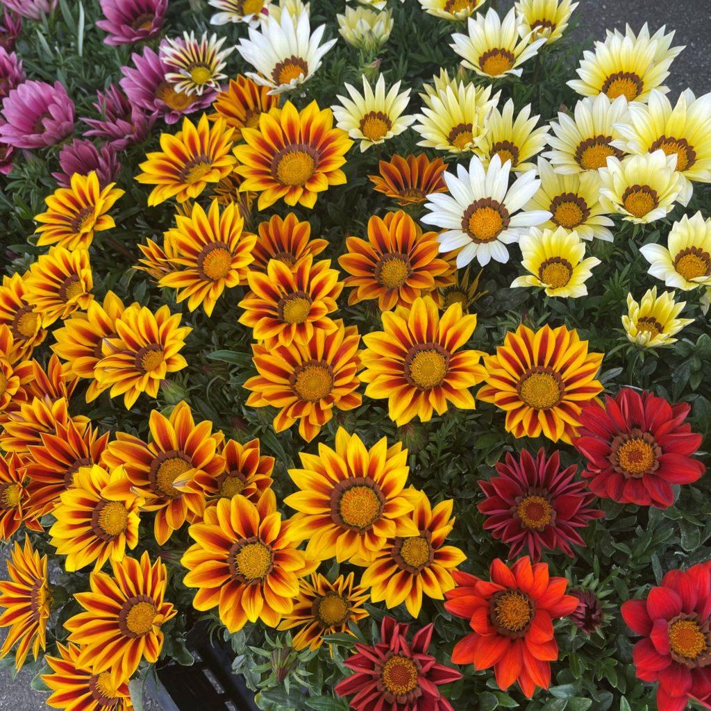 花の植替え作業